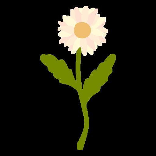Baby pink Daisy flower flat