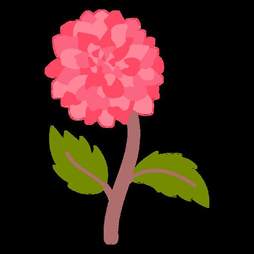 Hydrangea flower semi flat