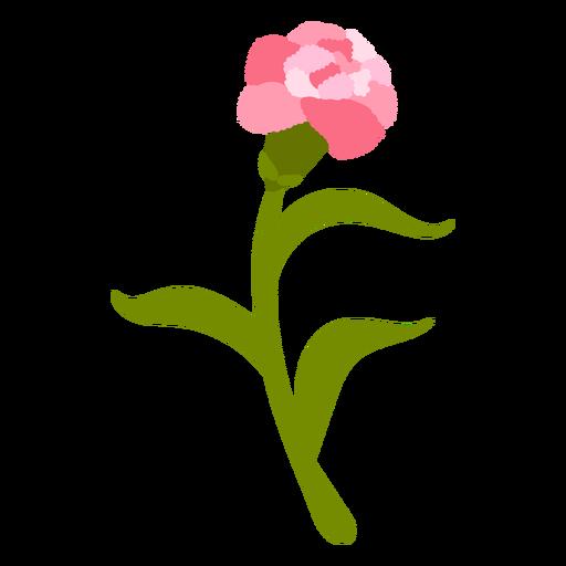 Pink flower petals nature