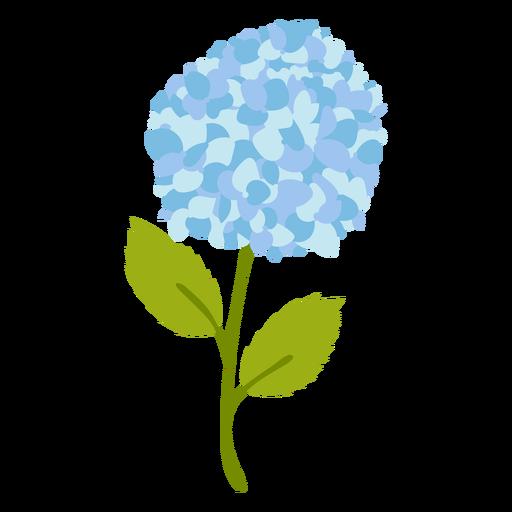 Blue Hydrangea flower flat