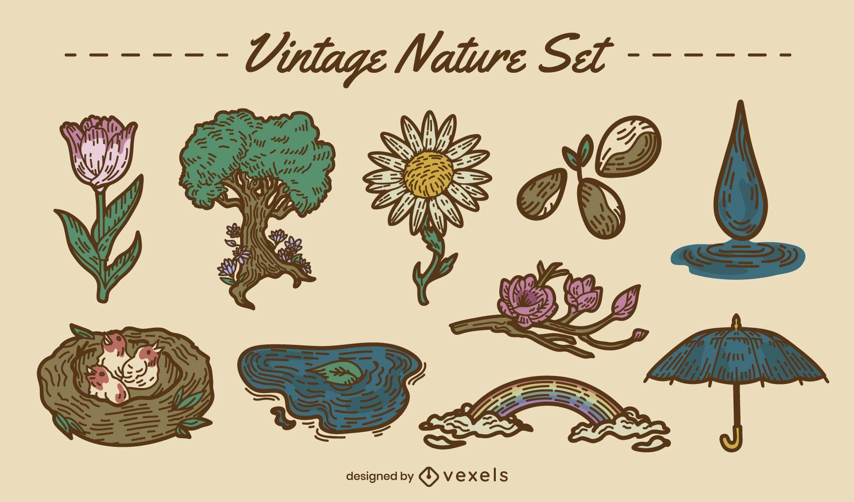 Conjunto colorido dibujado a mano del bosque de la naturaleza
