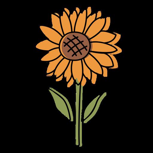 Sunflower nature color stroke