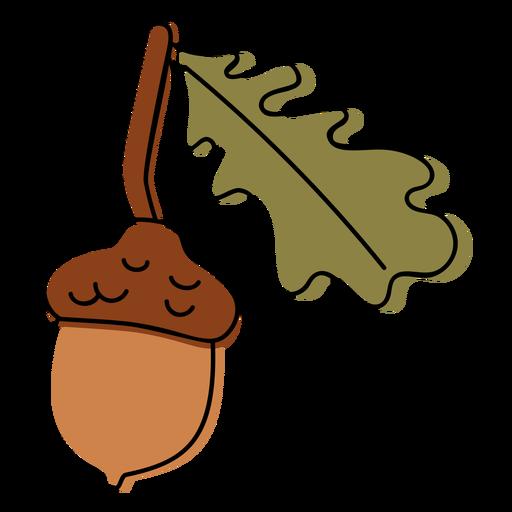Acorn seed nature