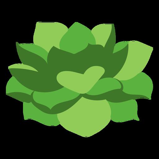 Nature-Botanical-FlatWash-VinylColor-CR - 4