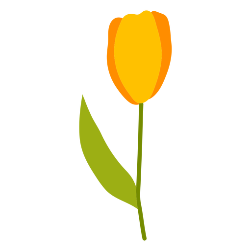 Single tulip flat