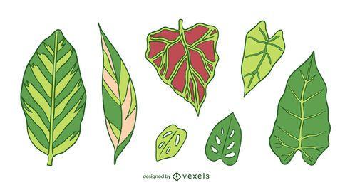 Conjunto de plantas naturais de folhas verdes
