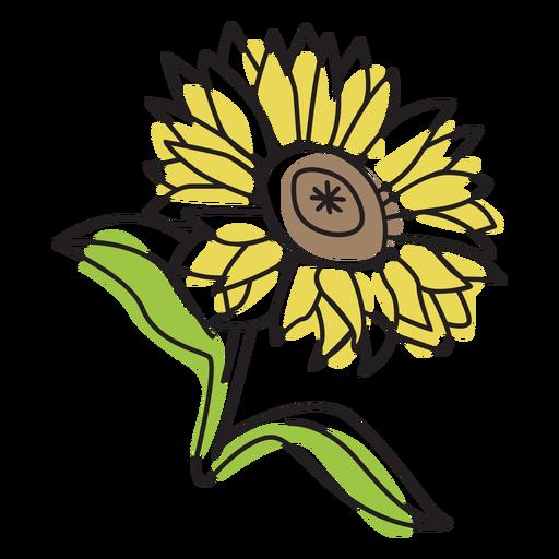 Pretty sunflower color stroke
