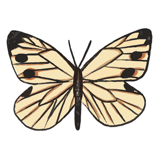White butterfly insect illustration