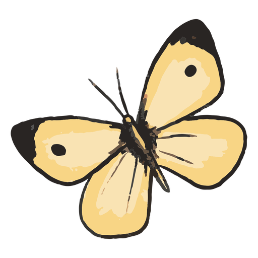 Yellow butterfly illustration
