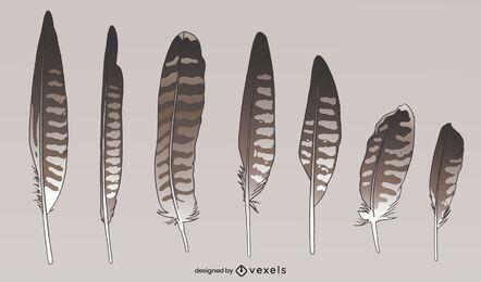 Conjunto de estilos de penas de pássaros selvagens de falcão