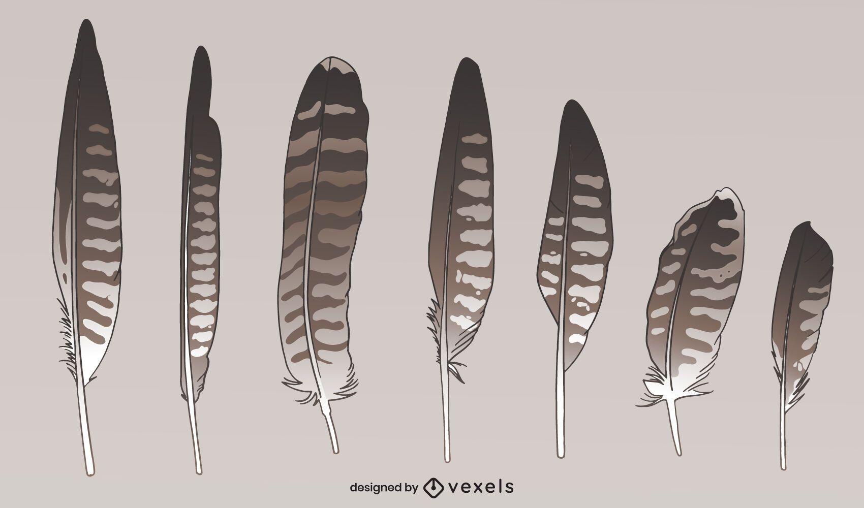 Conjunto de estilos de plumas de aves silvestres de halcón