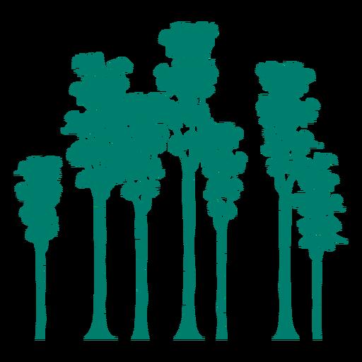 Poplar trees silhouette