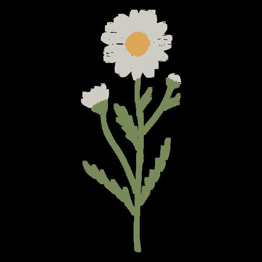 Aster flower semi flat