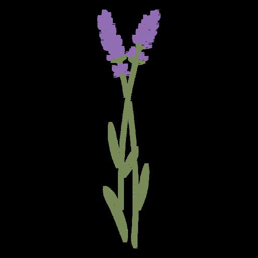 Lavender flowers stem cut out