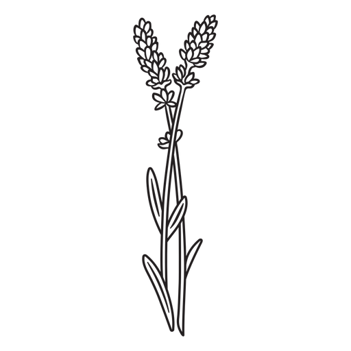 Lavender flowers stroke