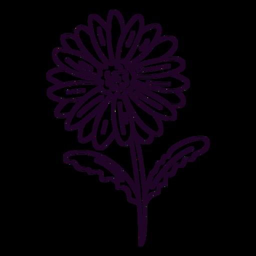 Daisy flower design stroke