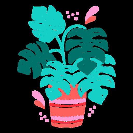 Monstera plant in a pot semi flat