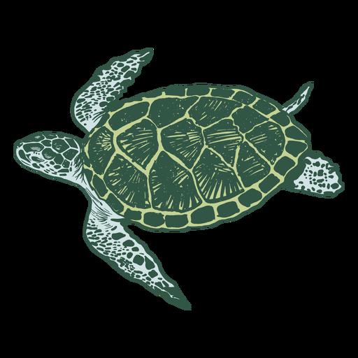 Meeresschildkröte - 0
