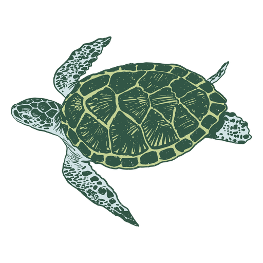 Sea turtle realistic
