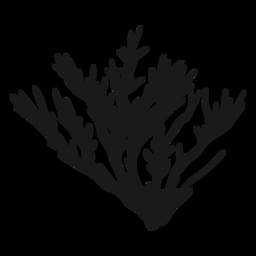 Coral silhouette