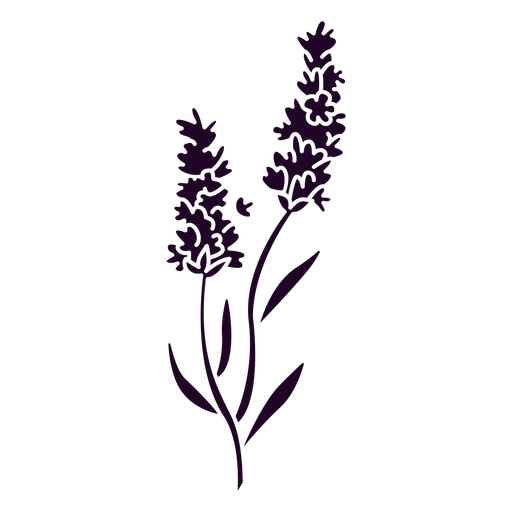 Lavender flowers on a stem cut out