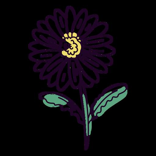 White daisy flower color stroke