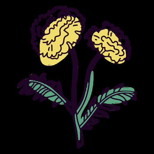 Dahlia flowers color stroke