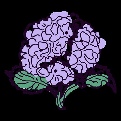 Hydrangea flowers color stroke