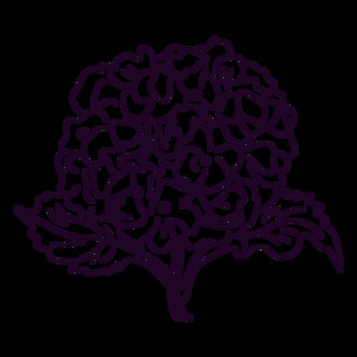Hydrangea flowers in a stem stroke