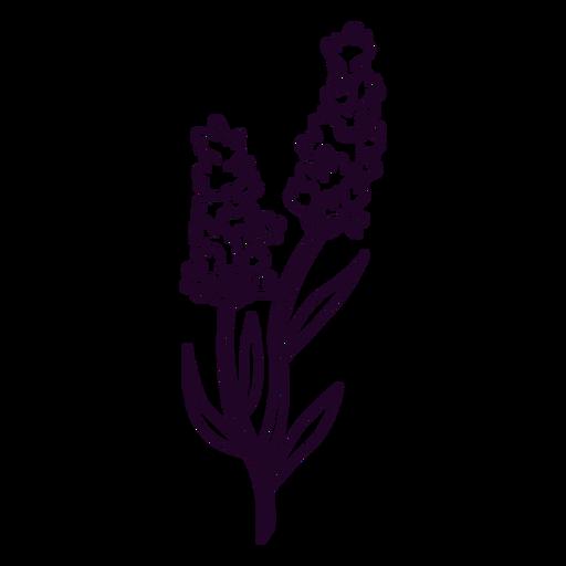 Lavender flowers in a stem stroke