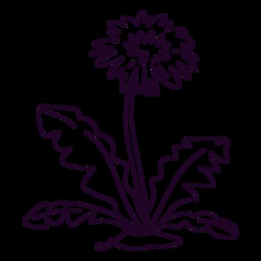Flor de diente de león y trazo de hojas.