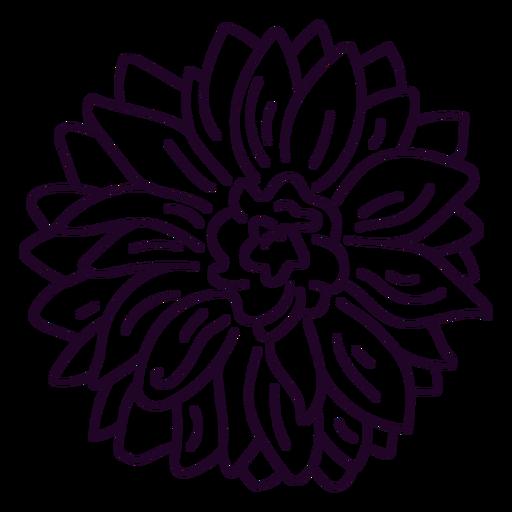 Dahlia flower stroke