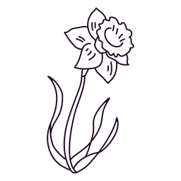 Single narcissus flower stroke