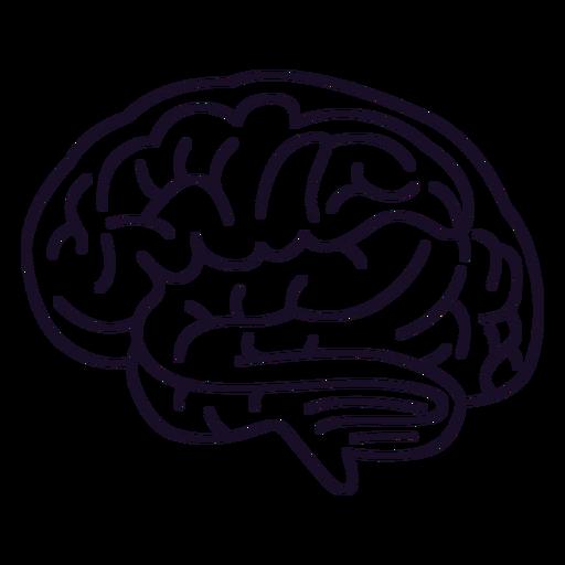 Brain outline stroke