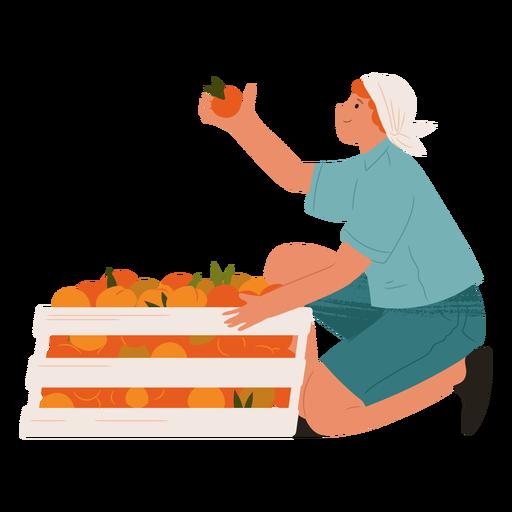 Woman picking up oranges semi flat