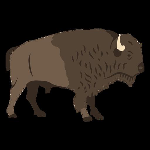 Buffalo profile flat
