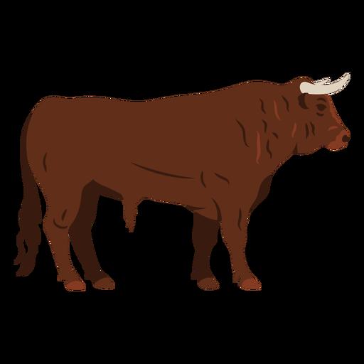 Bull profile flat