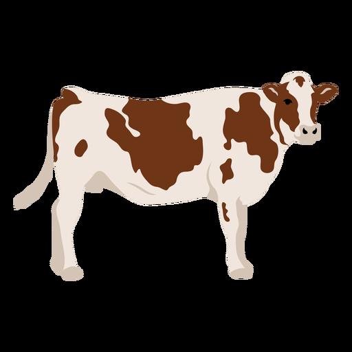Cow profile flat