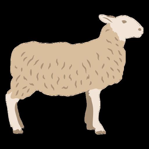 Sheep profile flat