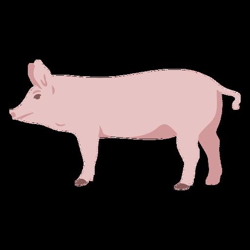 Pig profile flat