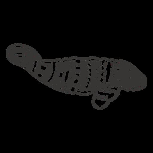 Seal sea animal mandala