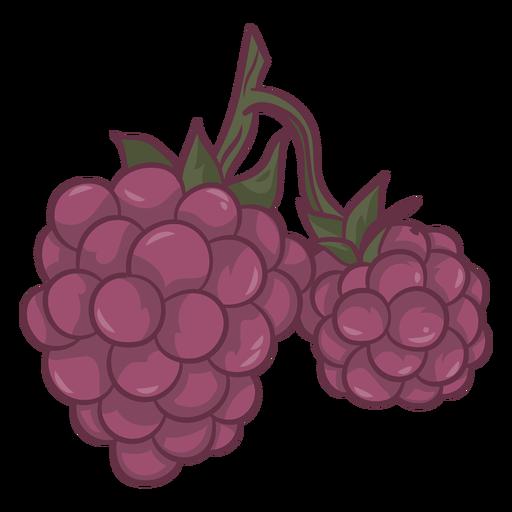 Grape fruits food