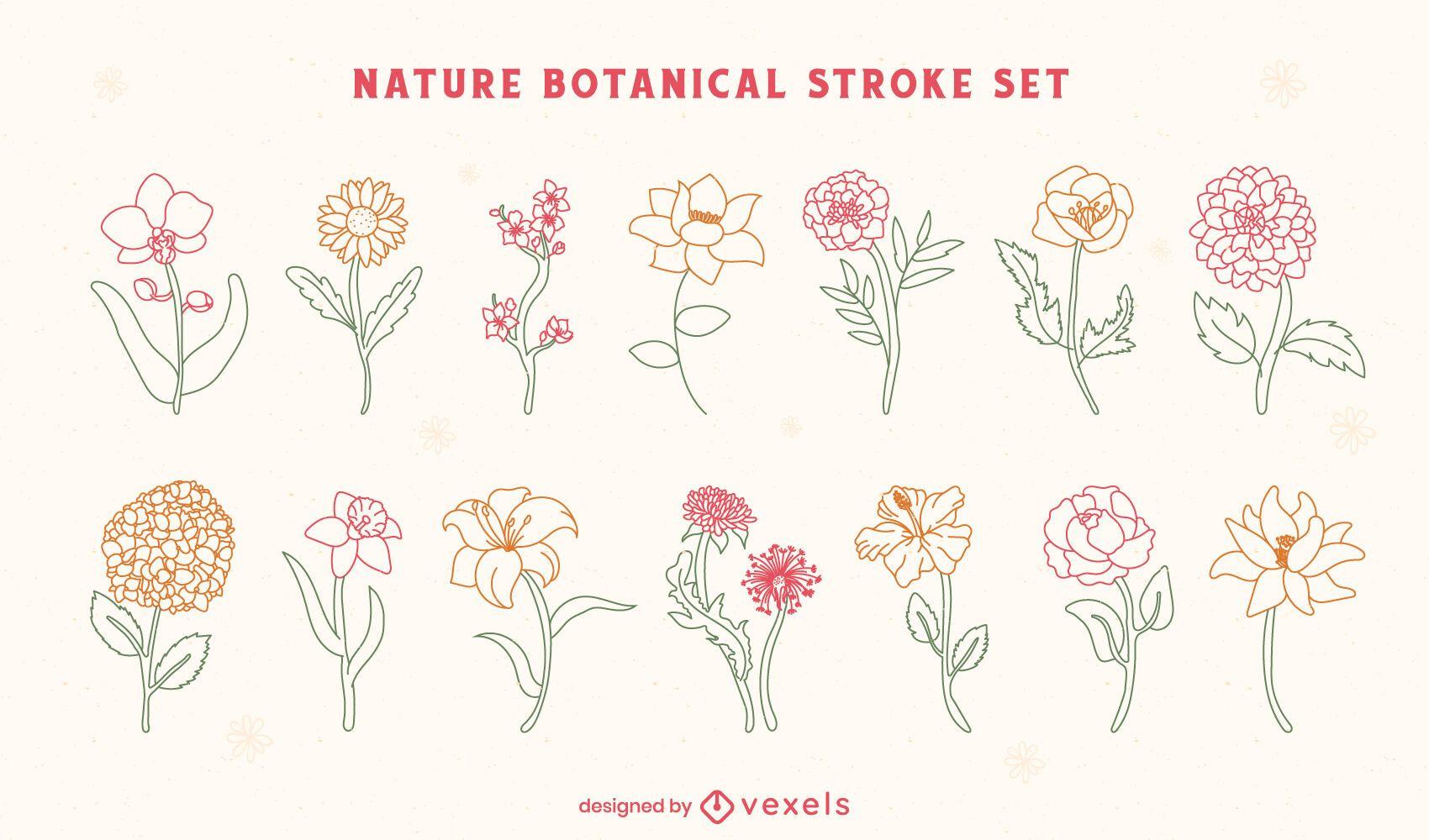 Blumen Natur botanische Linienkunst gesetzt
