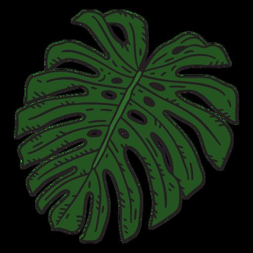 Monstera plant leaf color stroke