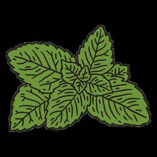 Mint leaves color stroke