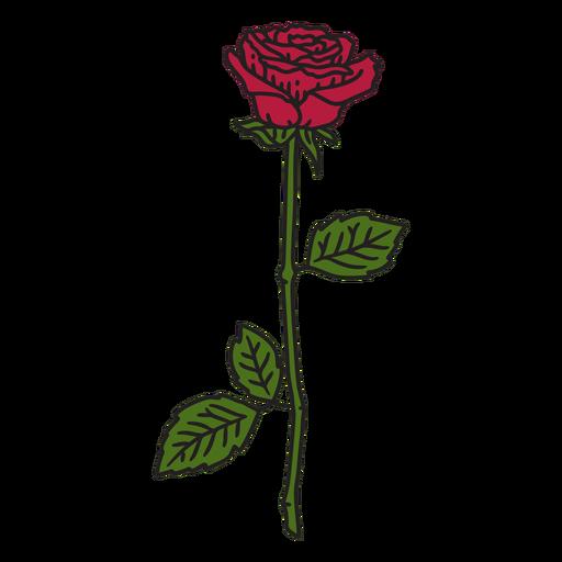 Rose flower color stroke