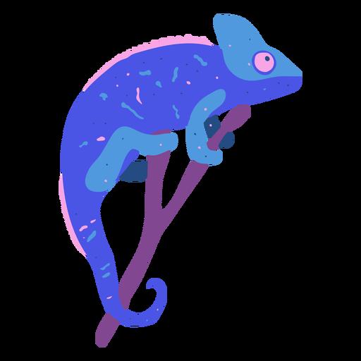 Blue chameleon animal nature