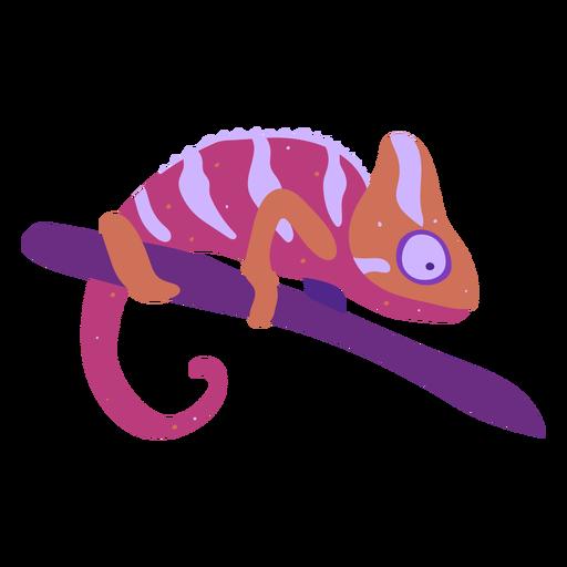 Multicolored chameleon reptile semi flat