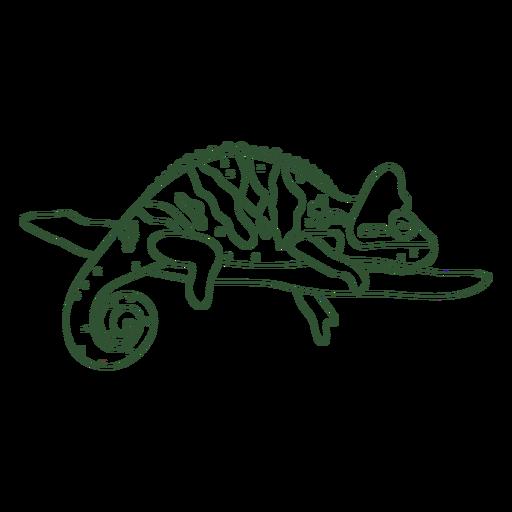 Chameleon animal sleeping stroke