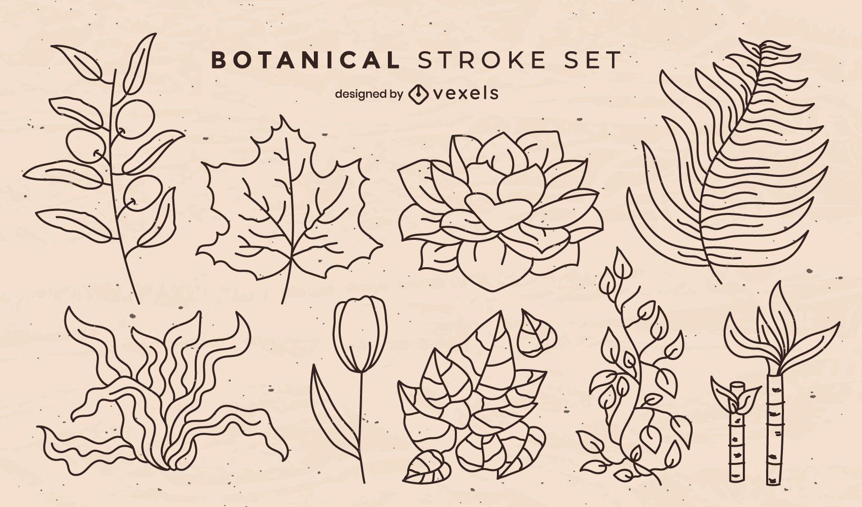 Conjunto de trazos de elementos de naturaleza de hojas botánicas